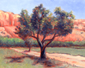 Apple Trees at Ghost Ranch