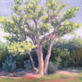 Green Cottonwood