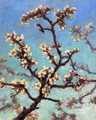 Spring Apricots
